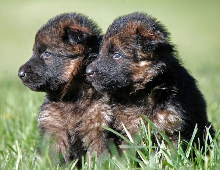 3 weeks old puppies.