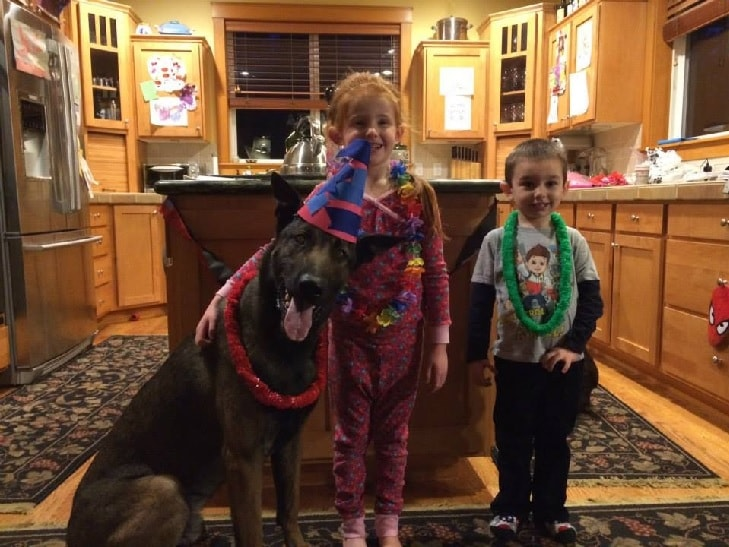 Belgian Malinois Enjoying With Children.