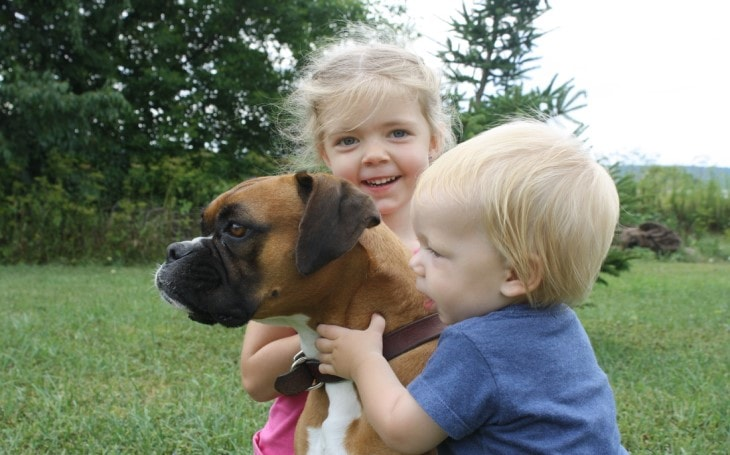 Boxers Are Friendly With kids