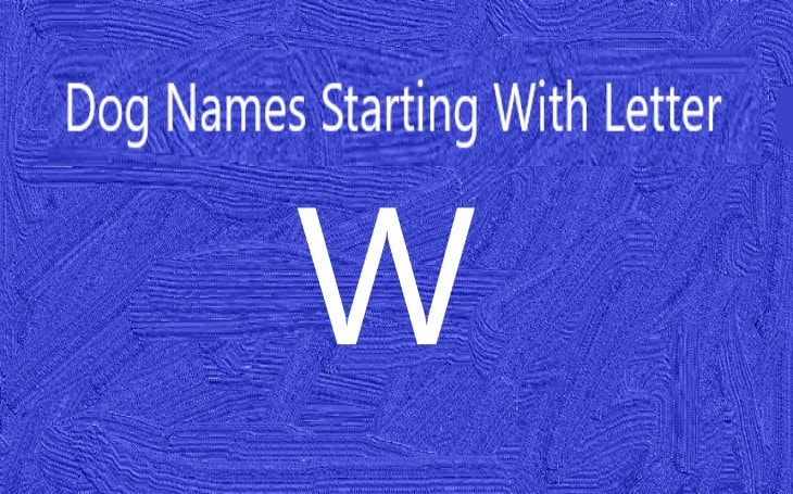 Dog Names starting With Letter W.