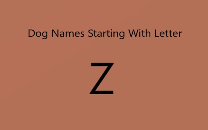 Dog Name starting with letter z.