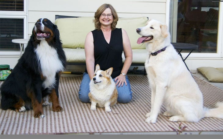 Three dogs with their owner.