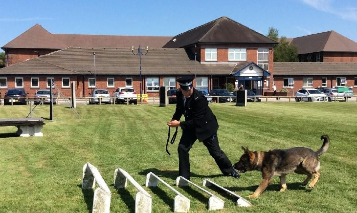 German Shepherd training with police