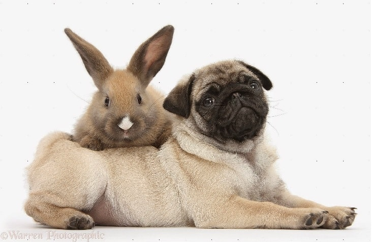 Dog and rabbit make a wonderful company together.