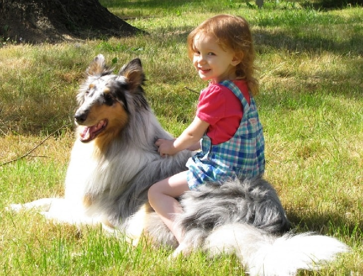 Rough Collie With A Kid.