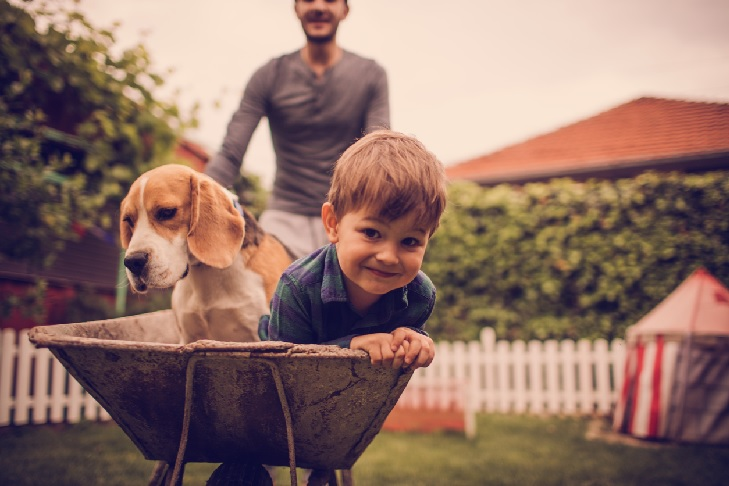 Beagle playing with a kid