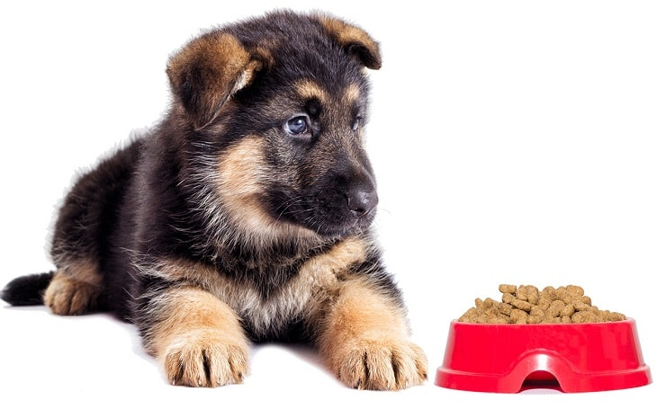 German Shepherd's Puppy with Food