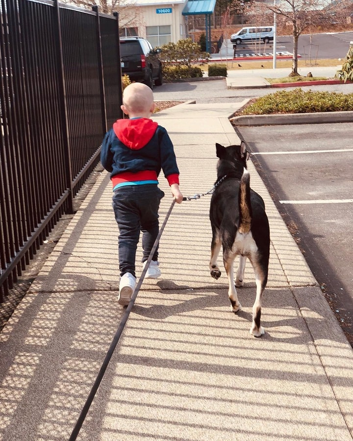 Lapponian Herder is child friendly