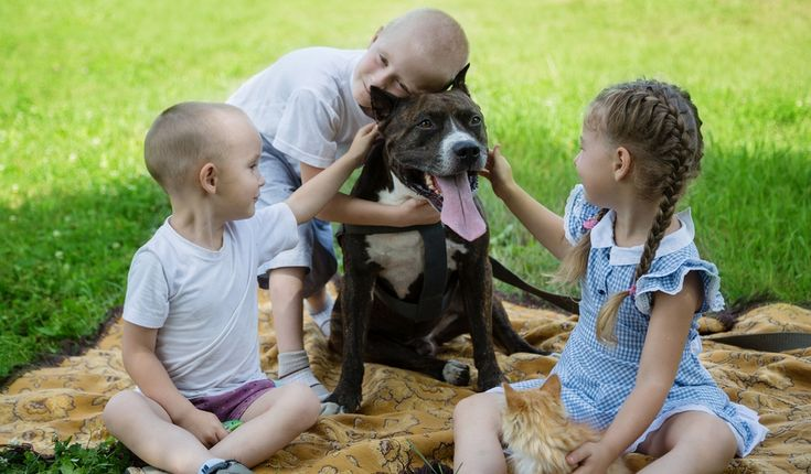American Staffordshire Surrounded with Kids