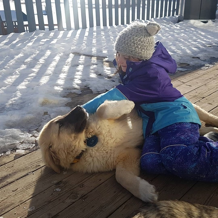 Anatolian Shepherd palyng with a kid