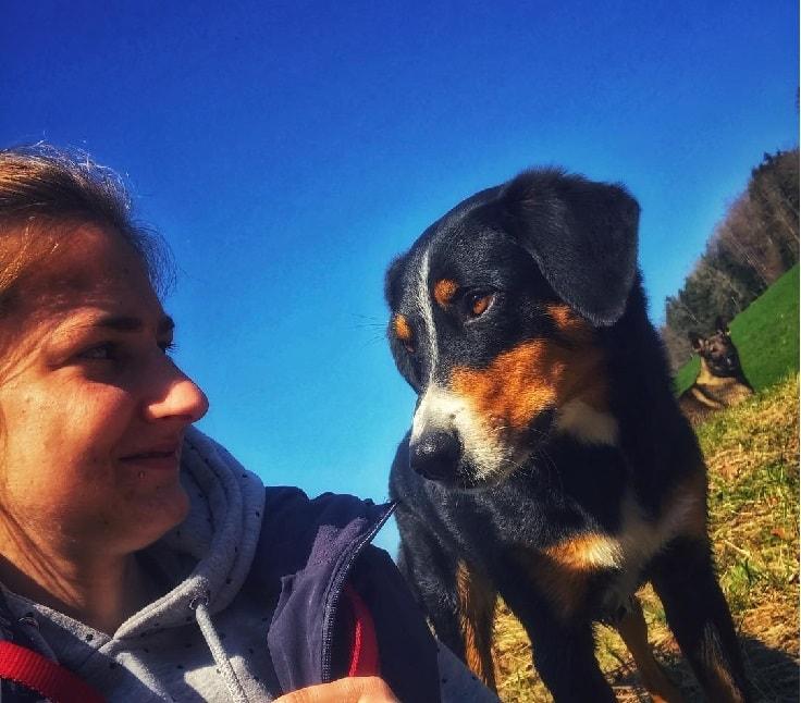 behavior of Appenzeller Sennenhund dog