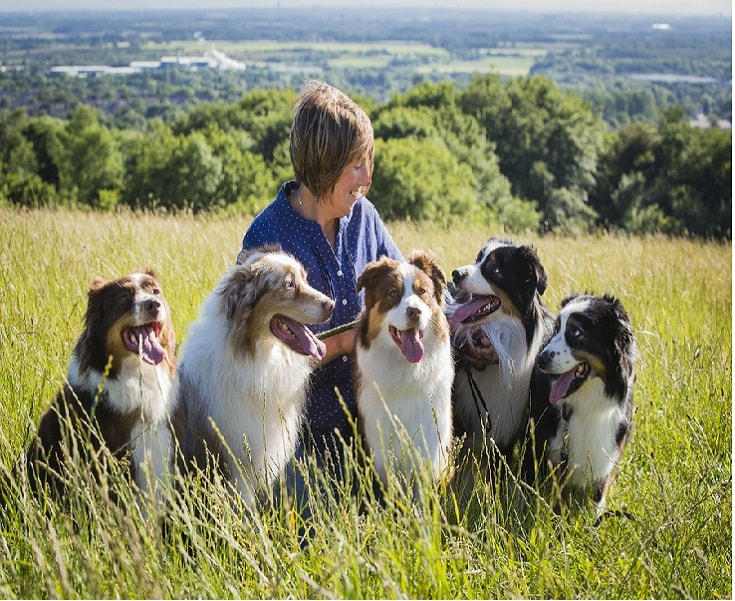 temperament of Australian Shepherd dogs