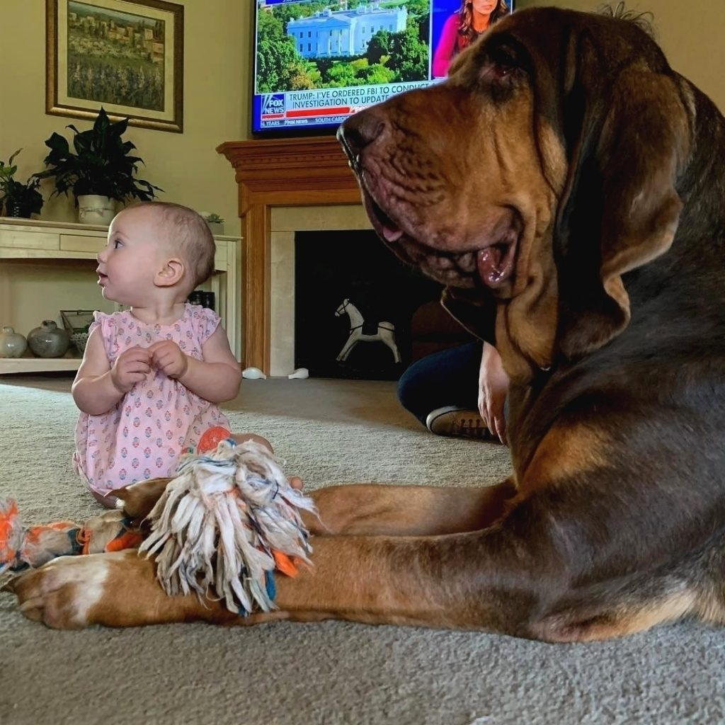 Bloodhound is child friendly
