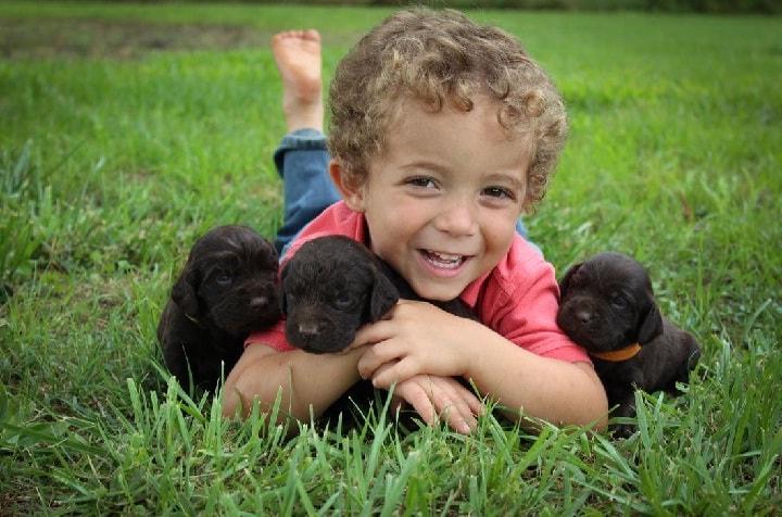Boykin Spaniel is child friendly