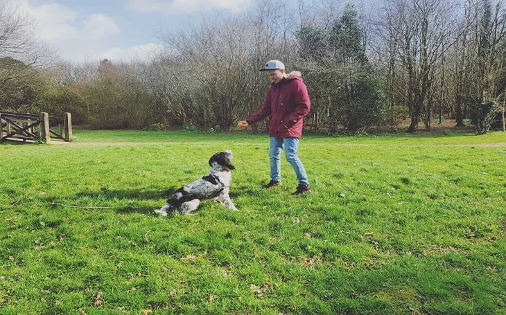 training process of English Springer Spaniel