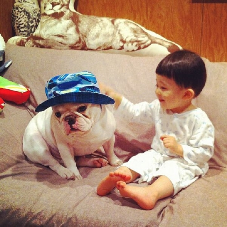 French Bulldog Loves Spending Time With Children.
