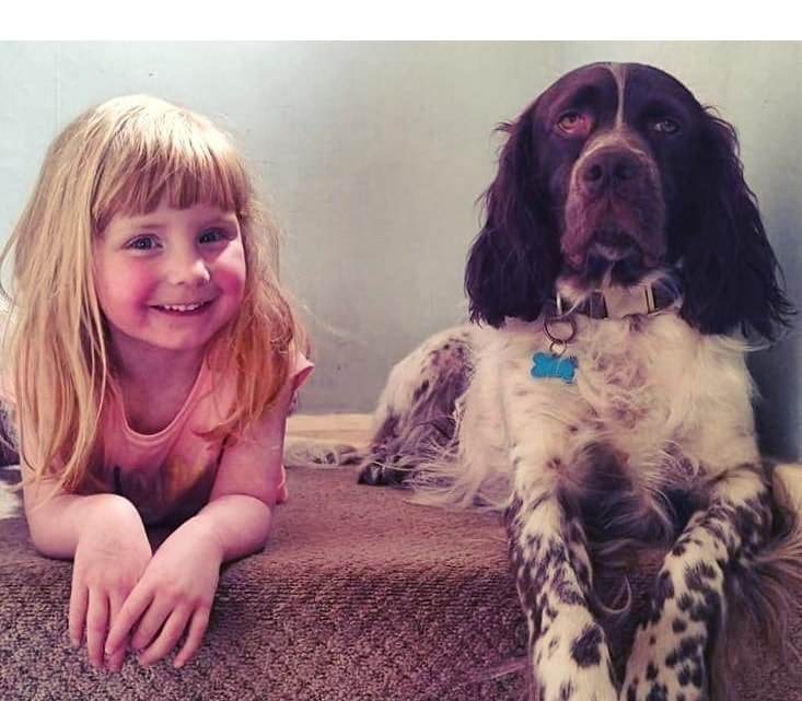 French Spaniel loves children.