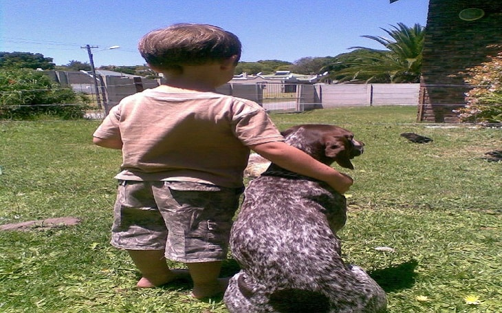 facts of German Shorthaired pointer dogs