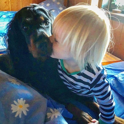 Gorden Setter is child friendly
