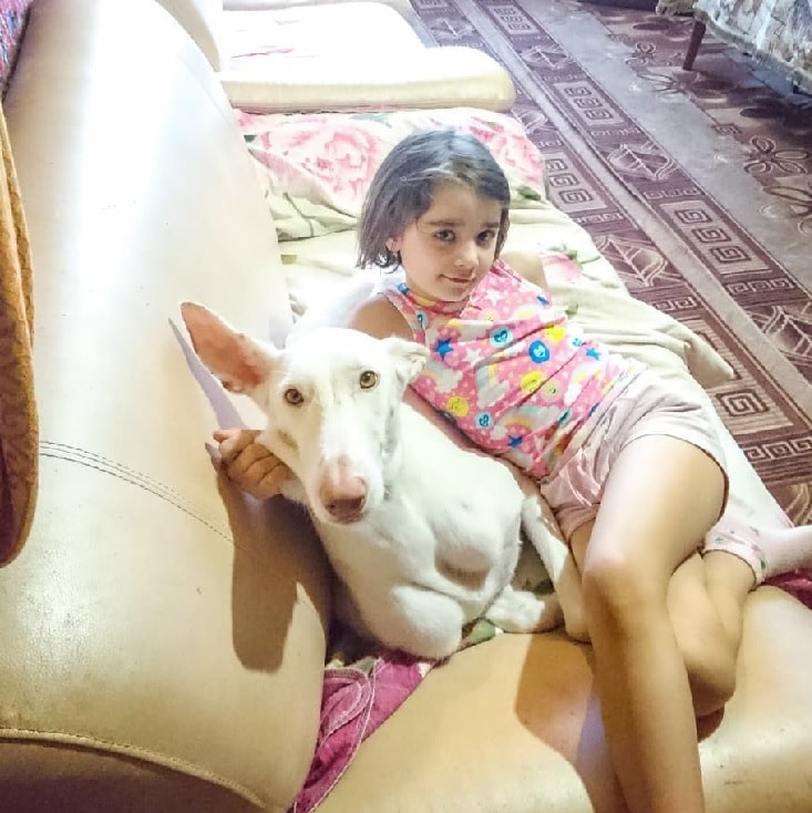 Ibizan Hound Sitting With A Child.