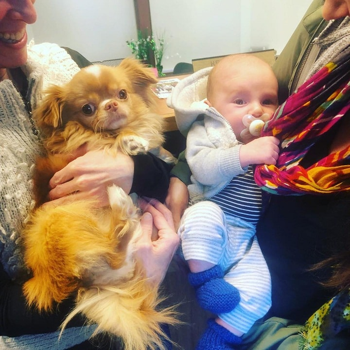 Japanese Chin is child friendly