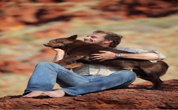 behavior of Australian Kelpie dogs