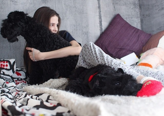 Kerry Blue Terrier Share A Strong Bond With Its Owner.