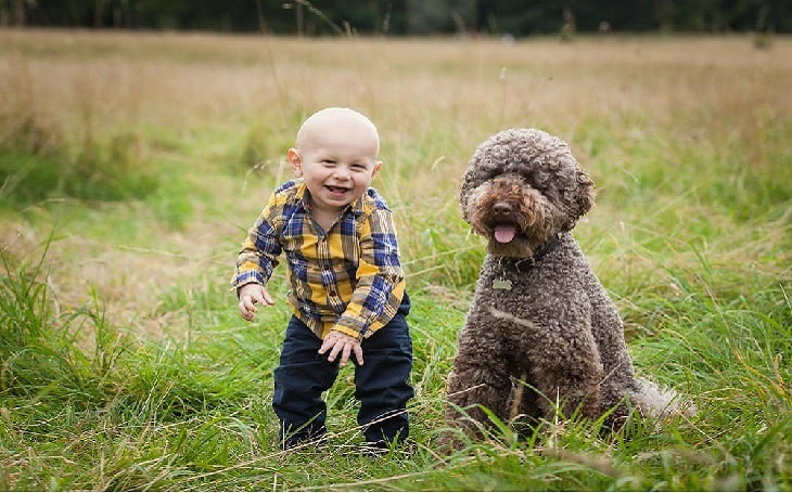 facts of Lagotto Romagnolo