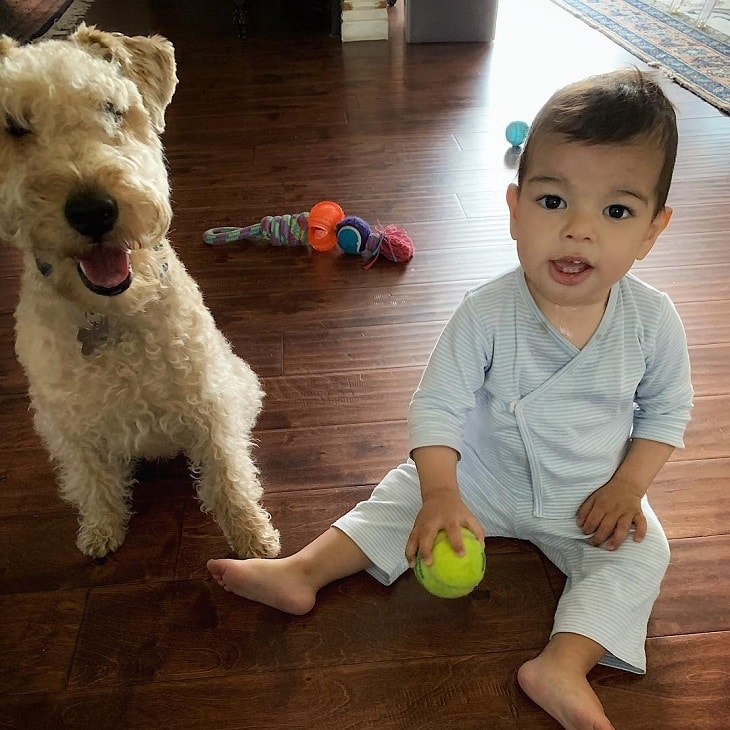 facts of Lakeland Terrier