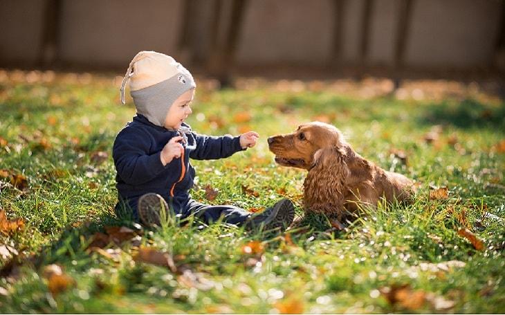 temperament of NederlandseKooikerhondje dog