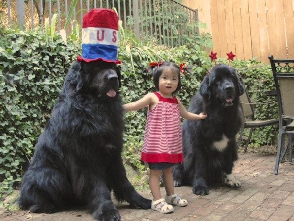 The Newfoundland Are Child-Friendly