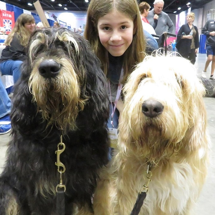 Otterhound is child friendly