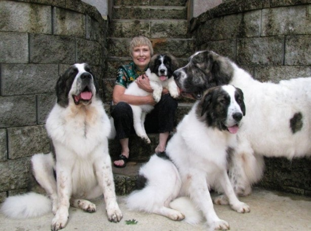 Pyrenean Mastiff Go Along With Other Dogs