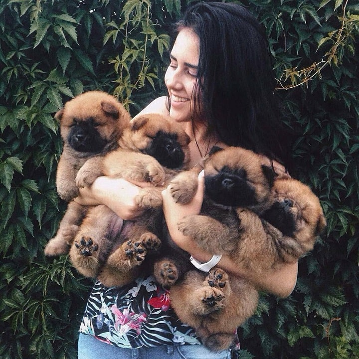 Women carrying Chow Chow Puppies