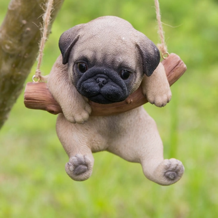 10 Amazing Cute Pictures Of Pug Puppies That Will Make You