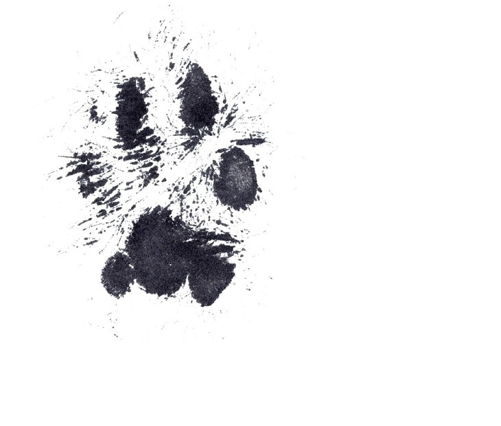Take the Print of Your Dog's Paws Using These Easy and Safe