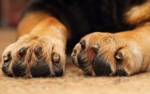 Paws of a dog.