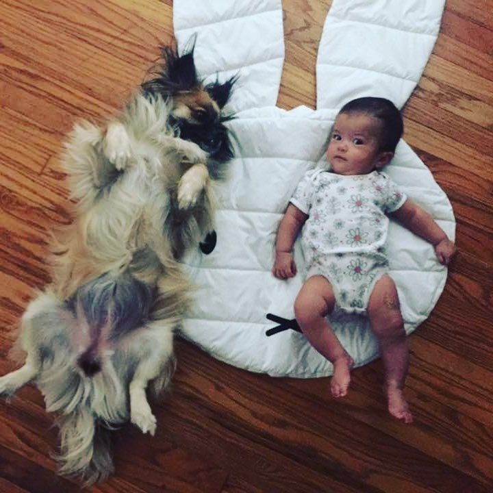 Tibetan Spaniel with a baby