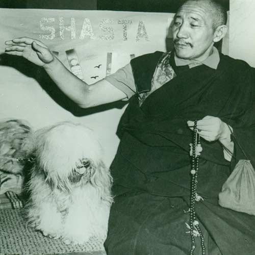 Tibetan Terrier History