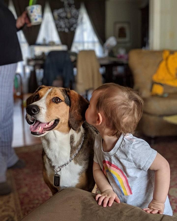 Treeing Walker Coonhound is child-friendly