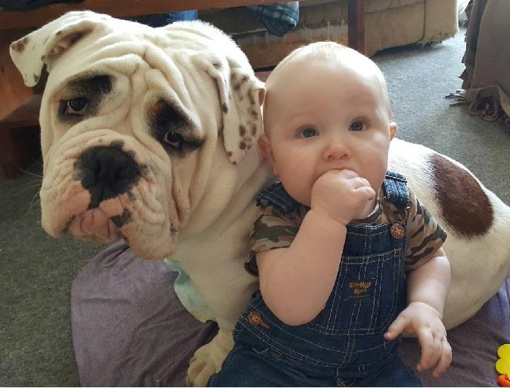 Valley Bulldog is child-friendly