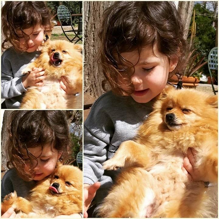Volpino Italiano is child friendly