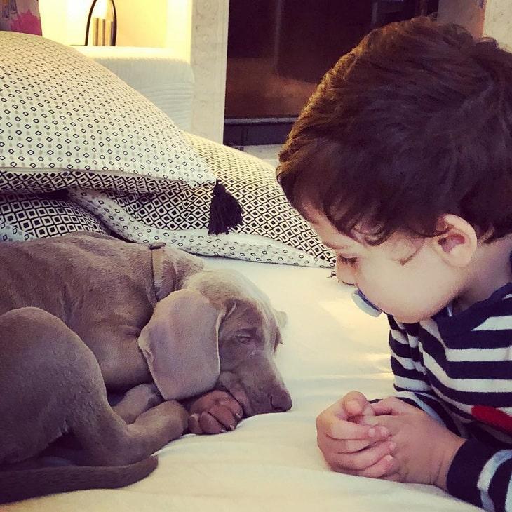 a baby boy watching Weimaraner puppy sleep