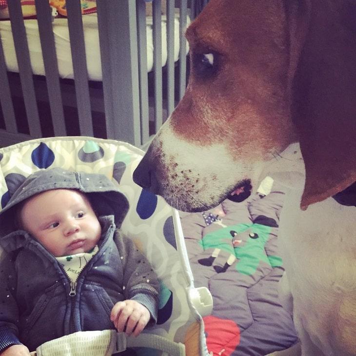 Treeing Walker Coonhound is child friendly