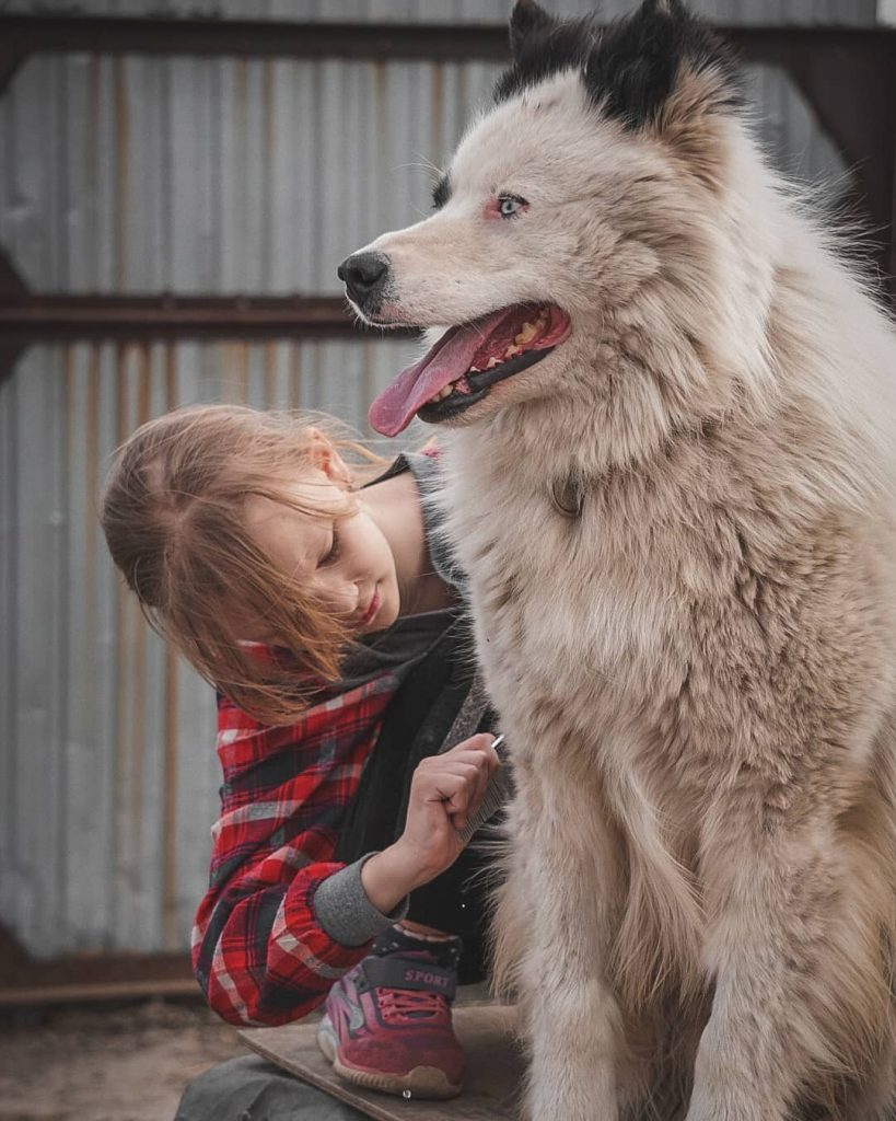 Yakutian Laika is child friendly