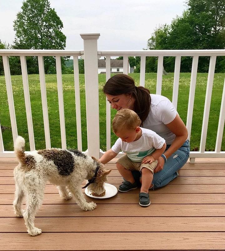 Wire Fox Terrier is child friendly