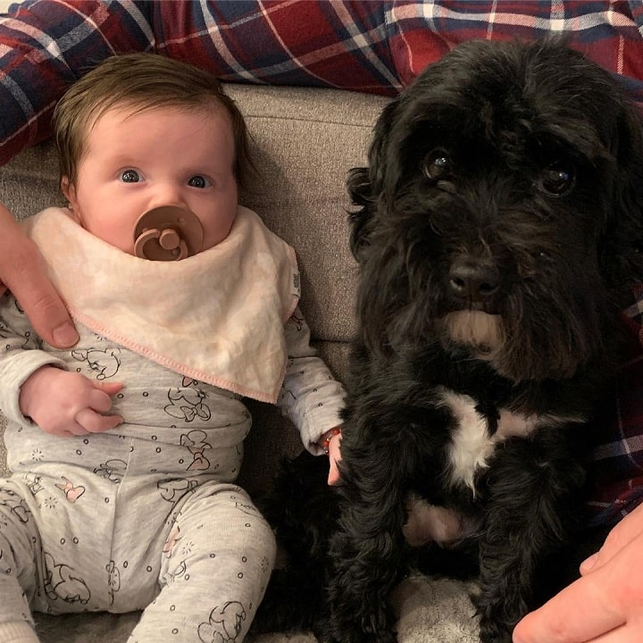 Yorkipoo is child friendly