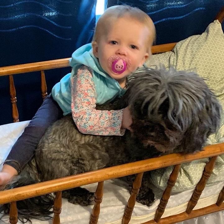Yorkie Bichon is child friendly