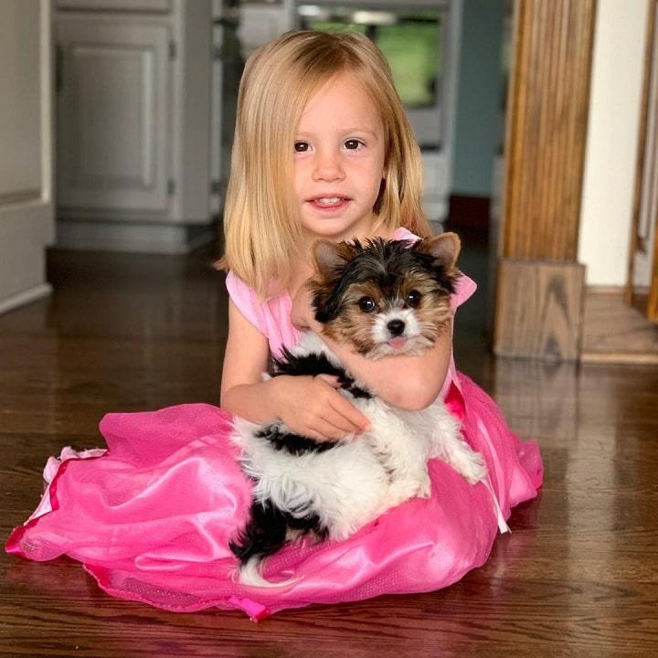 Biewer Terrier is child friendly