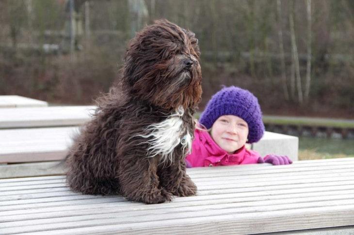 Russkaya Tsvetynaya Bolonka Make Excellent Choice For Families With Older Children.